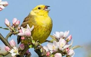 birdSinging-300x187