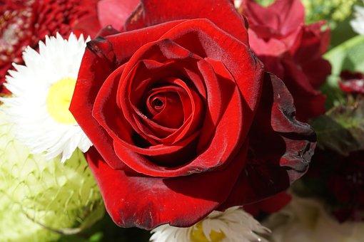 rose-2062243__340