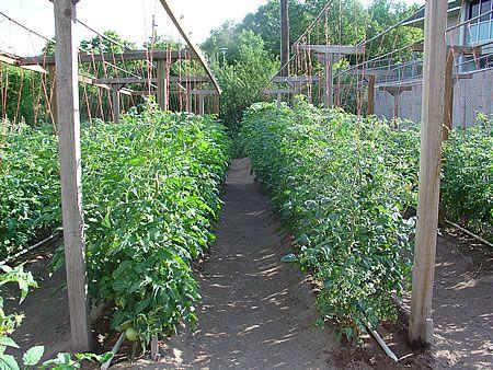 tomates-kalliergeia-04-03042011
